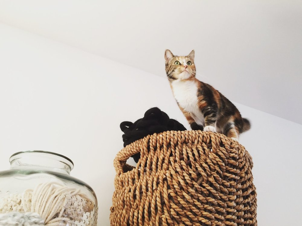 Nala on top of the rope/yarn basket (and I seriously thought they couldn't reach it on top of the cabinet!)