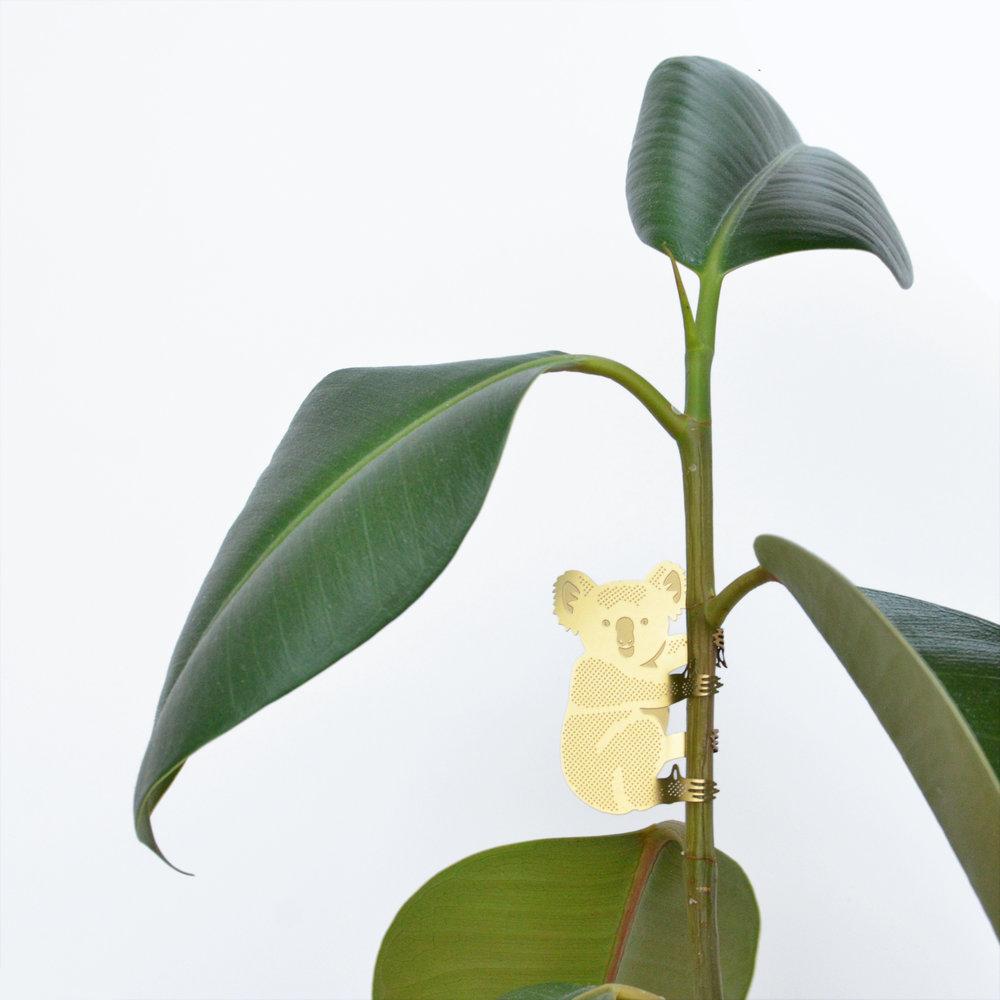 Koala-plant-animal.jpg