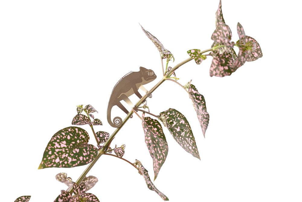 chameleon-white.jpg