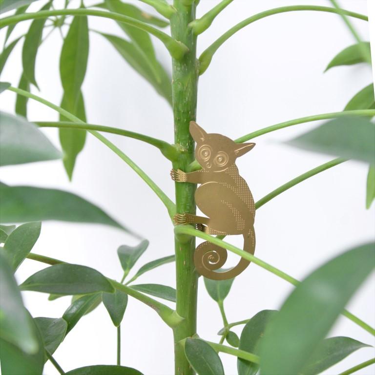 bush-baby - kopie.jpg
