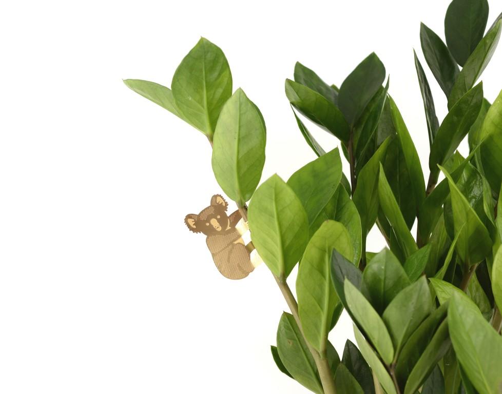 koala-plant - kopie.jpg
