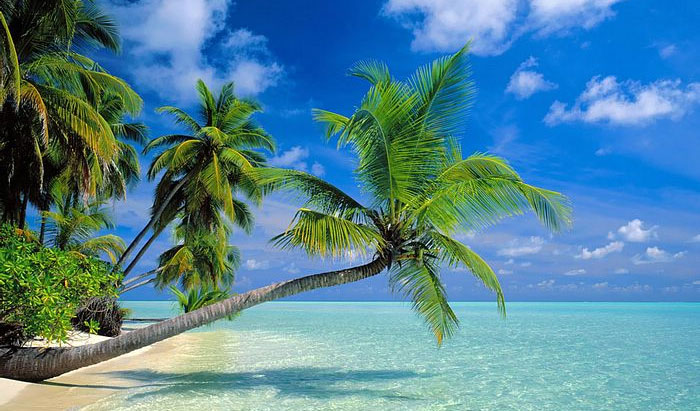 palm-trees1.jpg
