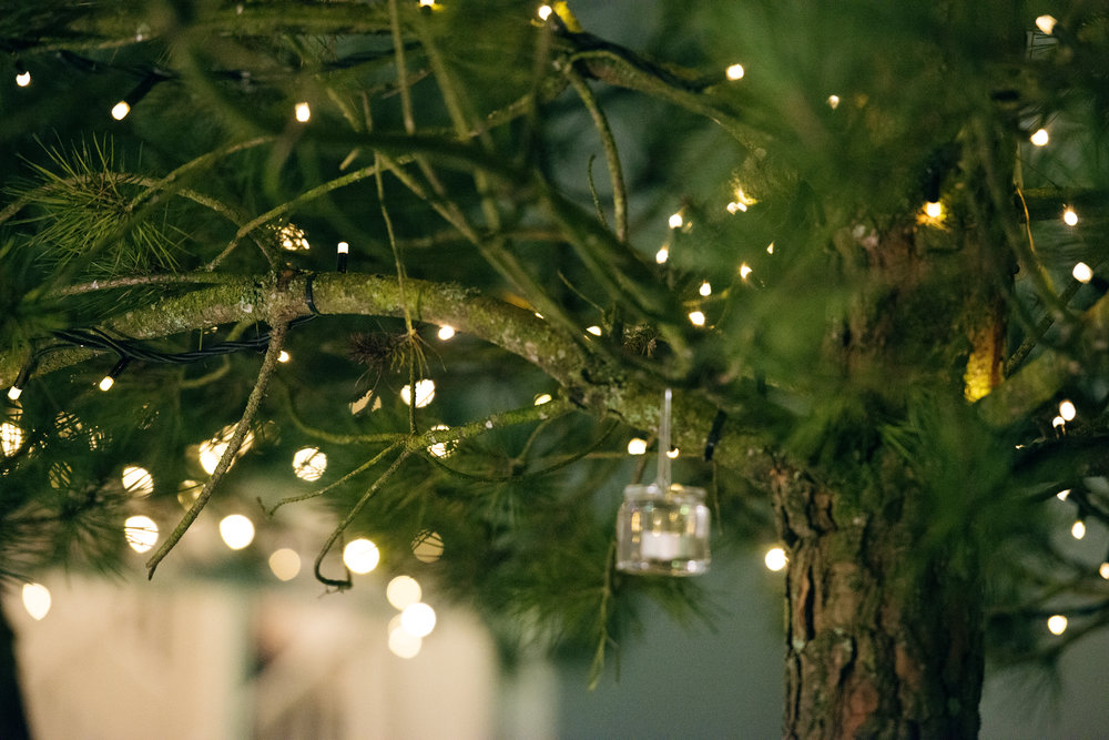 Tulfarris Hotel & Golf Resort lights in a tree wedding.jpg