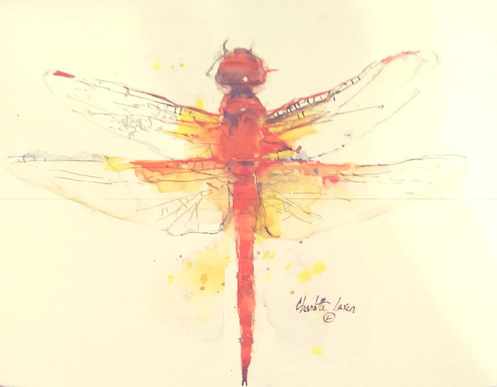 reddragonfly.jpg
