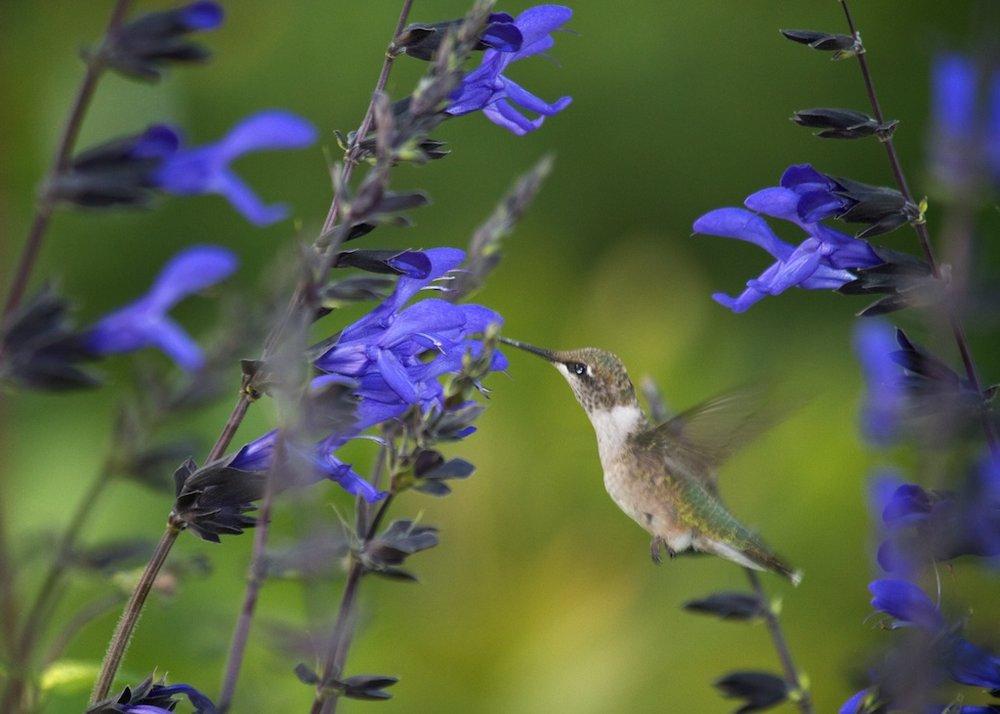 top 5 blue flowers vern goers greenhouse