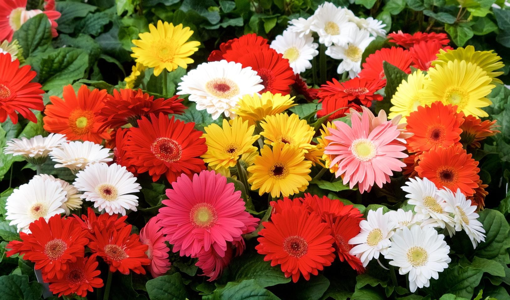 Spring Vern Goers Greenhouse