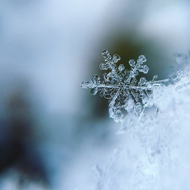 """""""The very fact of snow is such an amazement"""" - Roger Ebert"""