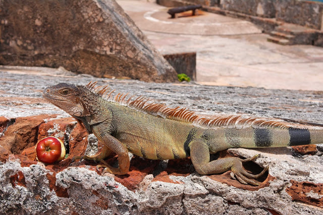 I was scared of the Iguanas, so the hubby took this photo for me.