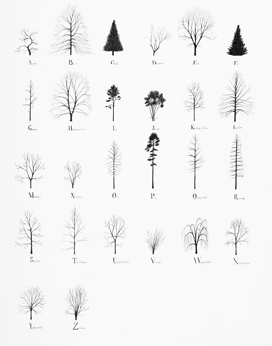 Tree Alphabet , 2015, pencil and ink on paper, 70 x 100 cm. First exhibited at the Zentrum Paul Klee in Bern, Switzerland at the group exhibition  About Trees .