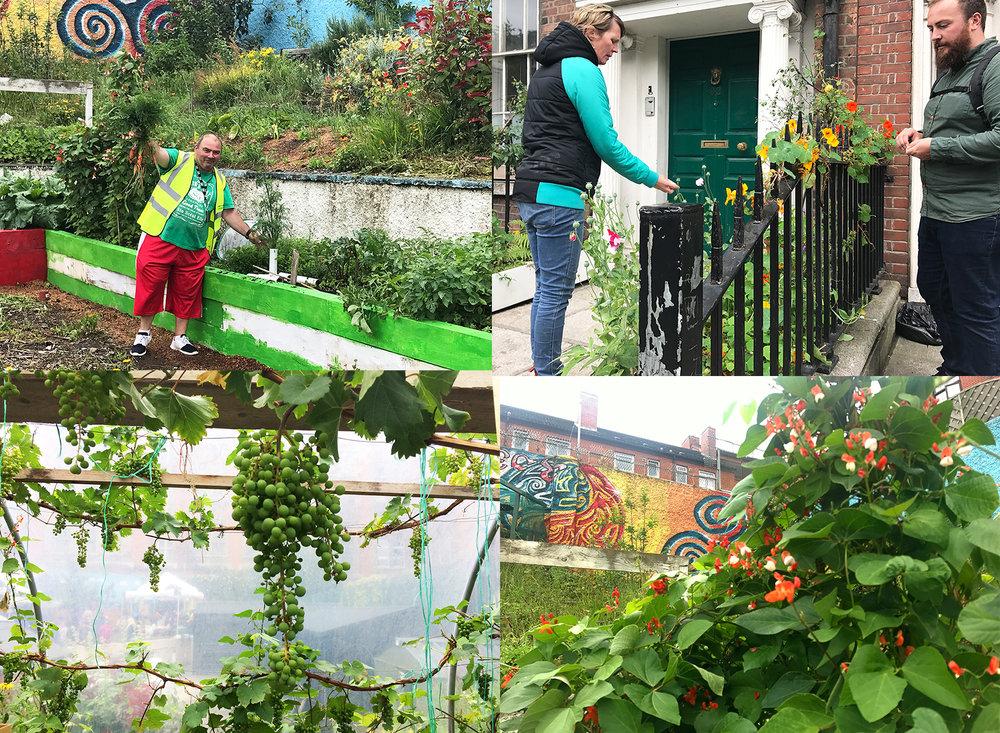 Harvesting Joyce with Jason Sheridan in local community gardens