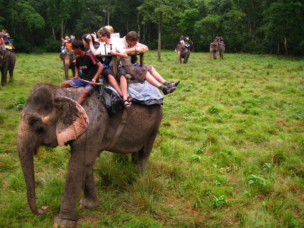 elephant tour horrible tourisme asie