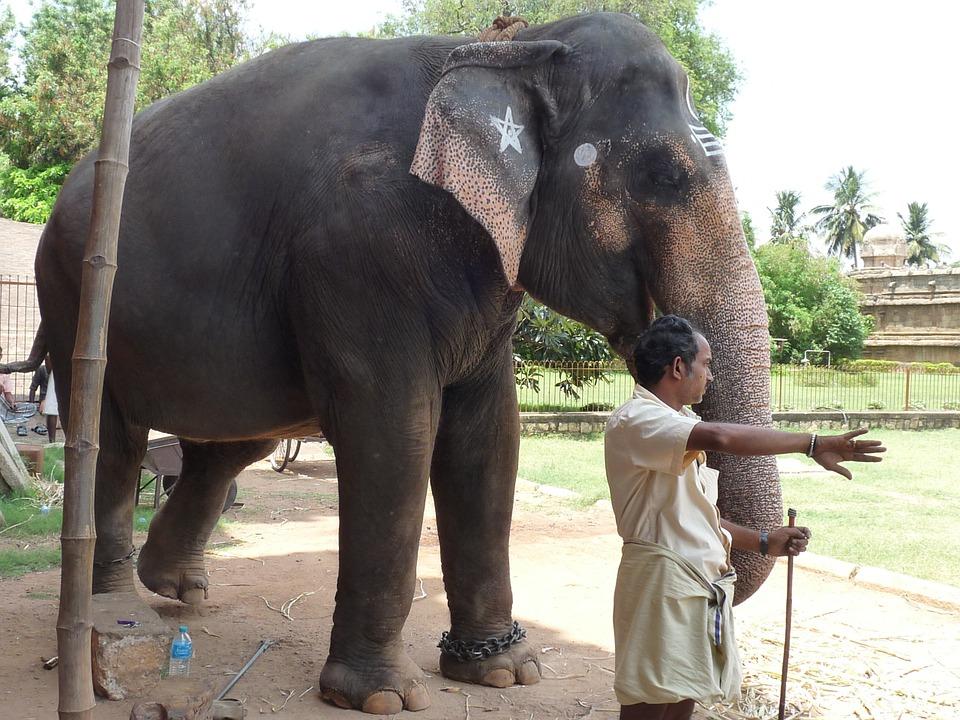 elephant tour tourisme maltraitance asie phajaan