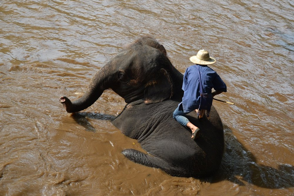 thailande asie éléphant tour tourisme phajaan maltraitance ecofriendly