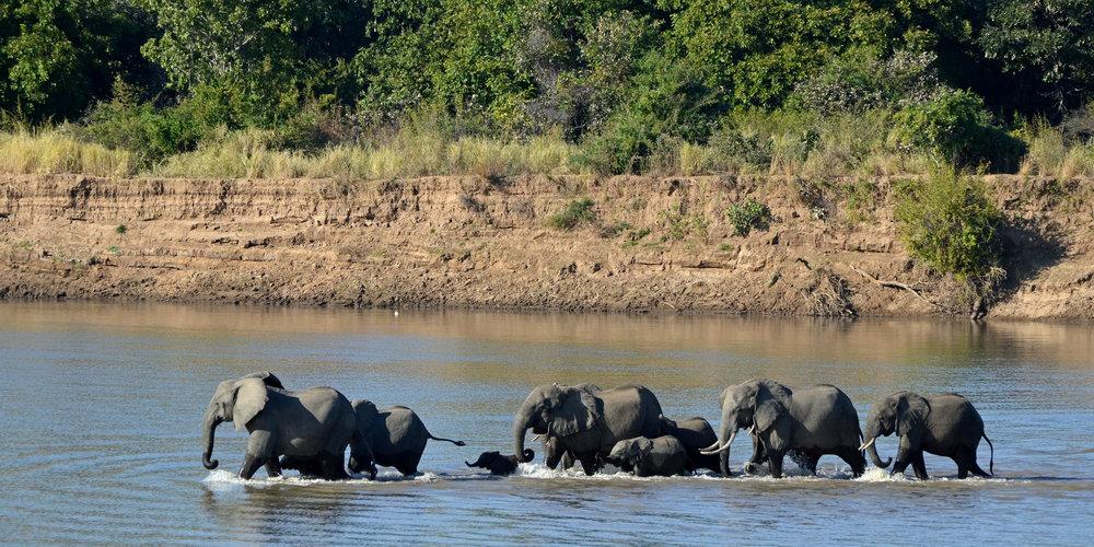 elephant phajaan thailande asie tour tourisme dos d'éléphant eco-responsable