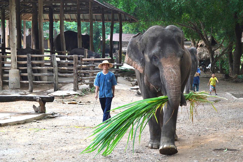 elephant tour asie thailande tourisme activité backpacker