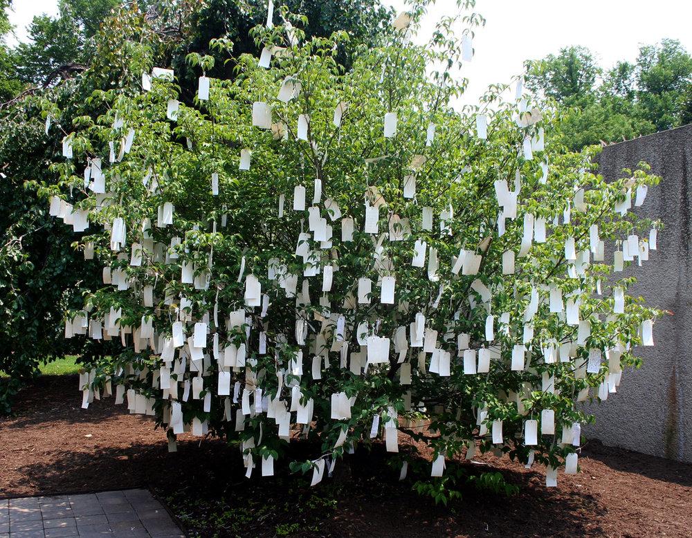 Wish tree 1.jpg