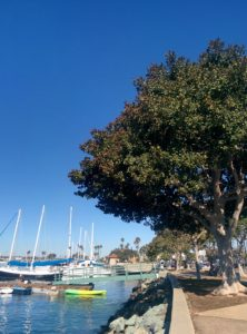 That tree fullness is #treegoals