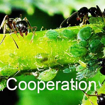 Cooperative-square.jpg