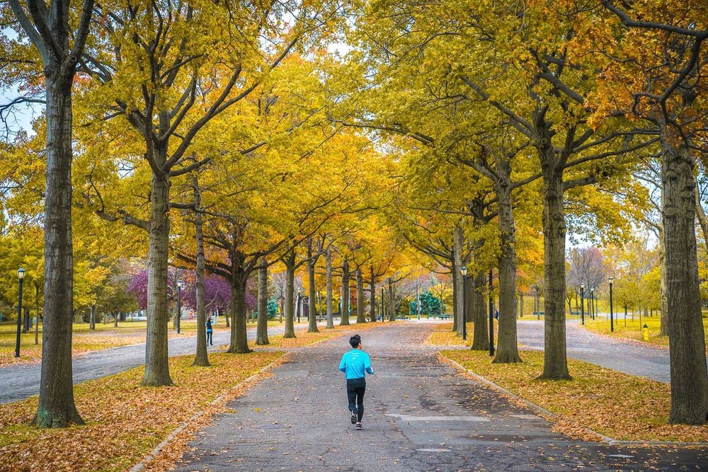 """Flushing Meadows Corona Park is known to runners as being """"flat as a pancake."""""""