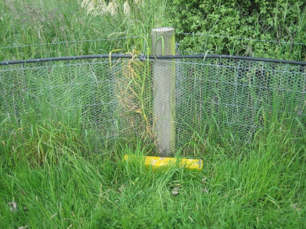 Predator proof fence and trap at Lansdowne Valley