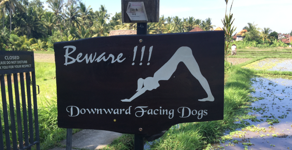 Downward-Dog-e1473446276164.png