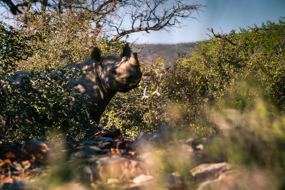 South Africa  by Mike O'Leary - Greengraf Photography-95.jpg