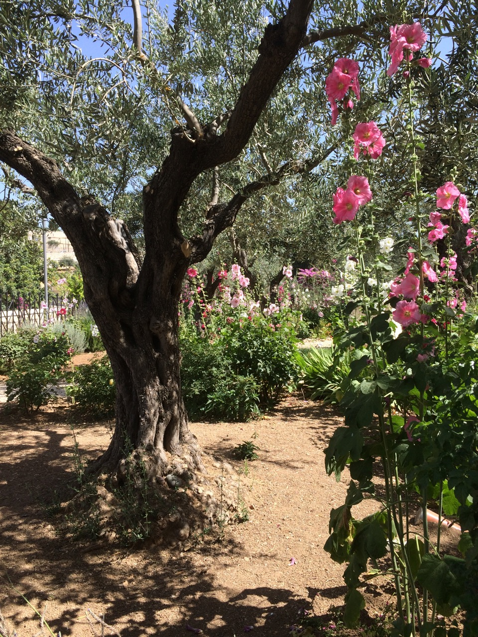 The Garden of Gethsemane