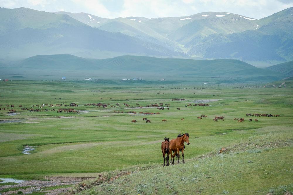 kazakh-corner-route-5237_35441112236_o.jpg