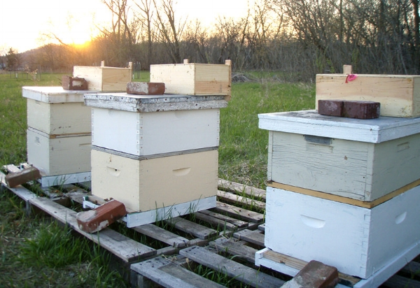 Standard hobby hive with one deep and one super.