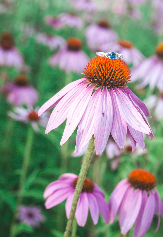Summer maternity ring on flower