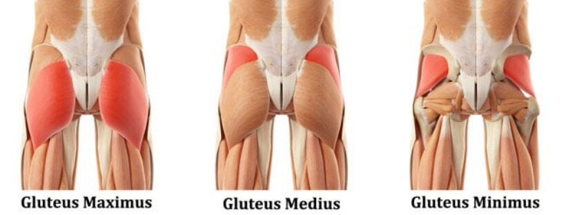 Retrieved from: https://yurielkaim.com/gluteus-medius-exercises/