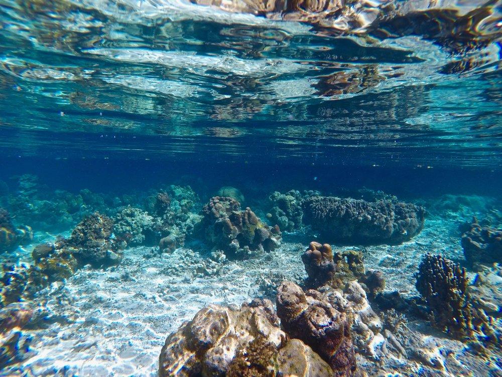 UnderwaterCoral_2_Palau.jpg