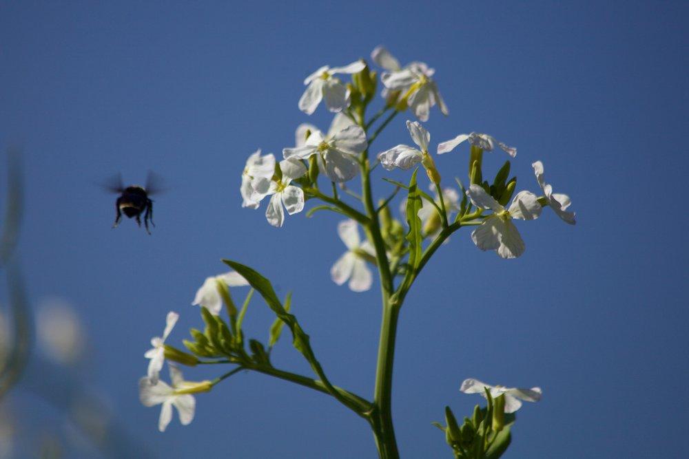 Nature_flowerandbee.jpg