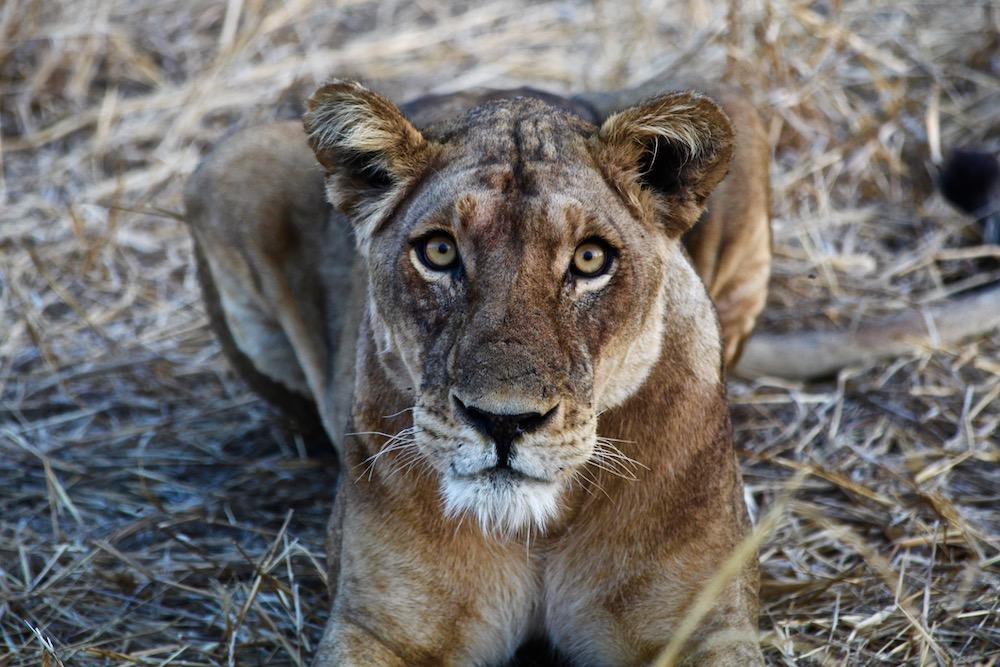 nature_safari3.jpeg