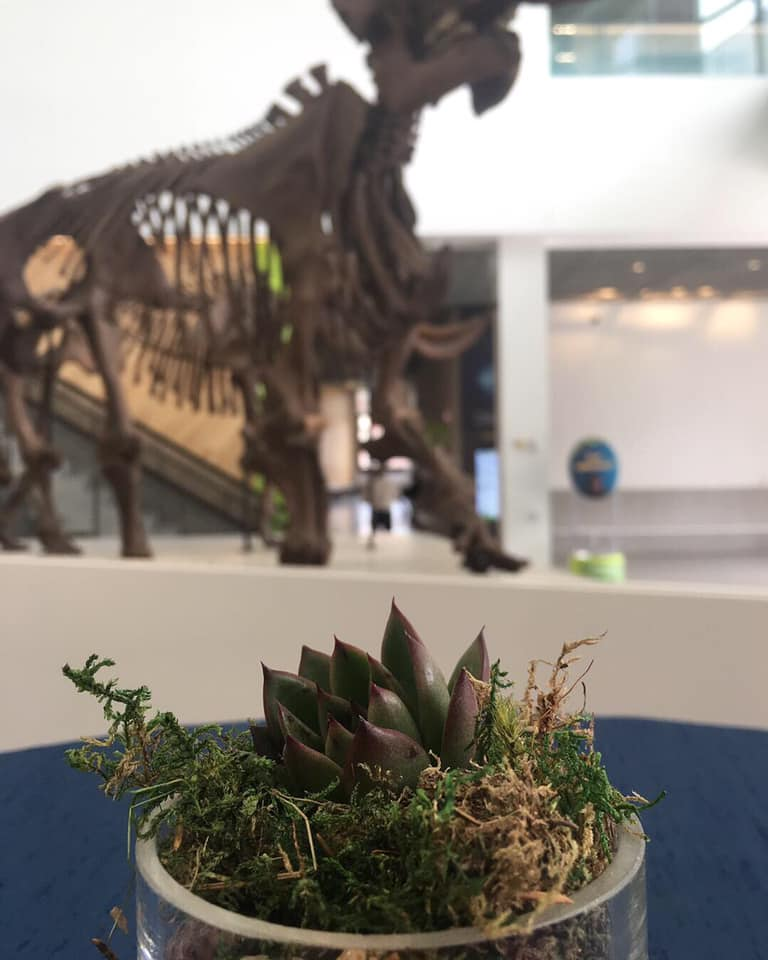 Grand Reopening of University of Michigan Museum of Natural History