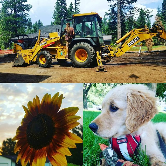 Some of our new loves and helpers: Betsy the Backhoe, Sunny the Flower, and Honey the Puppy.  For leveling, pollinating, and loving!  #organic #greenlove #marketgardener #love #farmtotable