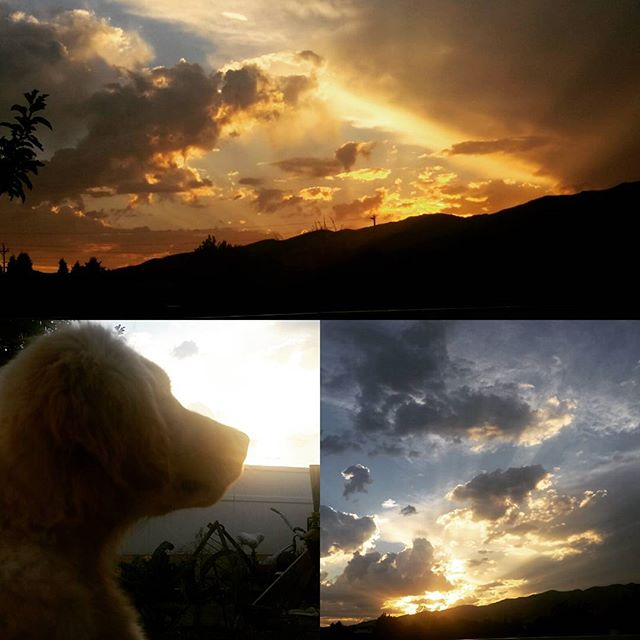 What? Oh that is a beautiful sunset over Reno!  #renosunset #organicreno #nevadagrown #honeythepuppy #goldenretrieverpuppy #love