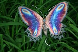 Purple-butterfly-300x200.jpg