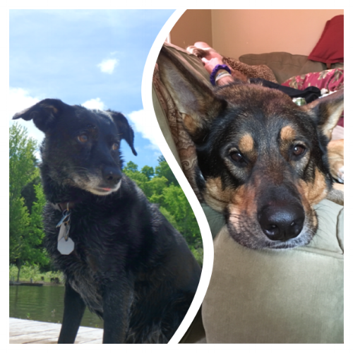 Lily and Harley: Jerky Beggars/Family Pets/Company Mascots. Can be summoned by the sound of a jerky bag opening and will sit and shake for jerky scraps. Cameo appearances in the videos, often not by design! Lily loves boating while Harley not so much! And I thought dogs naturally loved water.
