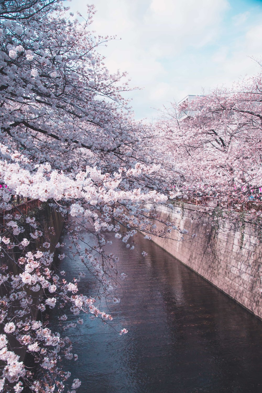 Tokyo photographer hire freelance travel casual candid Japan (15).jpg