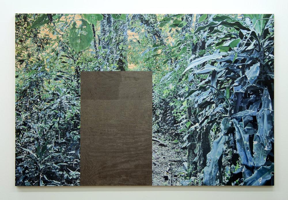 kakamega forest web.jpg