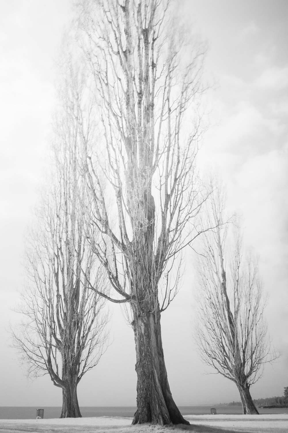 Inferred trees.