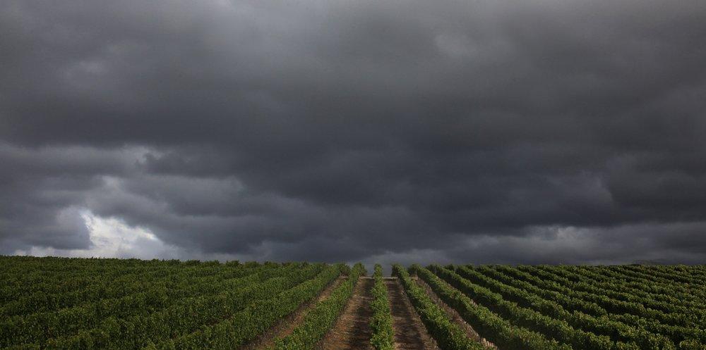 Harvest08.jpg