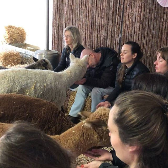 New: shinrin-alpaca classes! A twist to the populair shinrin-yoku. Bathing between the alpacas with all your senses. #alpaca #mindfulalpaca #alpacalove #shinrinyoku #shinrin #forestbathing #forestbathingtherapy #comejoinus