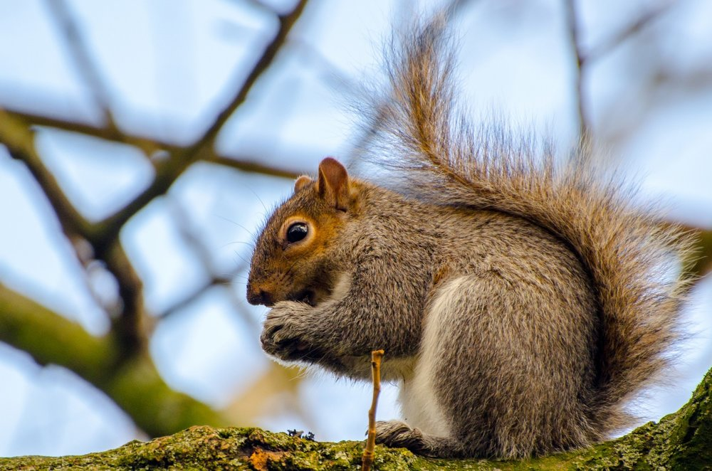 squirrel-1389376624T24.jpg
