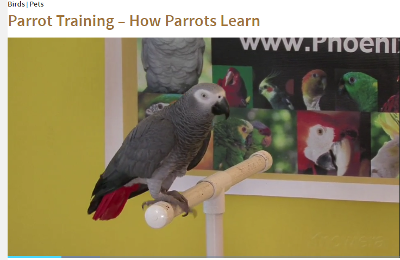 How Parrots Learn.png