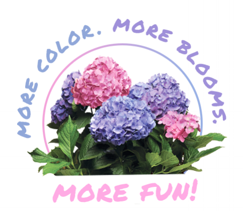 L.A. Dreamin'®Hydrangea adds easy color to any space. With multi-colored blooms throughout the season, this hydrangea will appeal to beginner and experienced gardeners! L.A. Dreamin'® Hydrangeaalso makes a great cut flower. Long-lasting in any vase, it is perfect for bringing inside. For a pop of color in any room, or a more dramatic centerpiece on your table, L.A. Dreamin'® Hydrangea will bring a bit of summer inside.