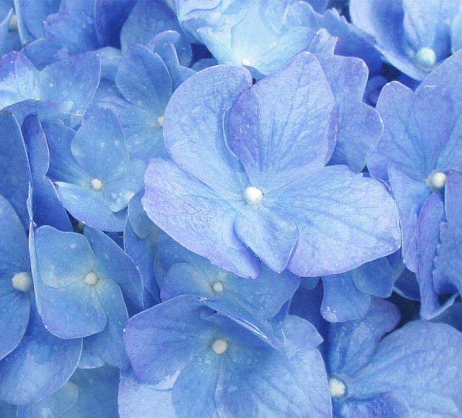 blue-LADH.jpg