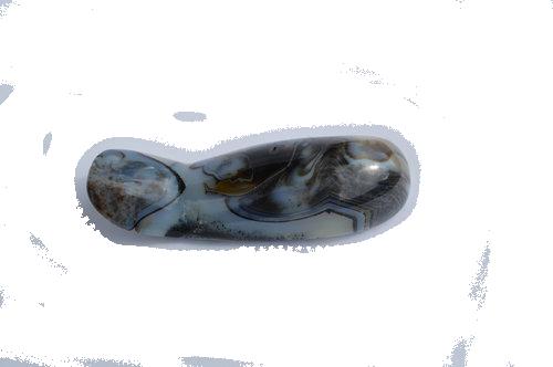 SeaJasperShoeHorn2.png