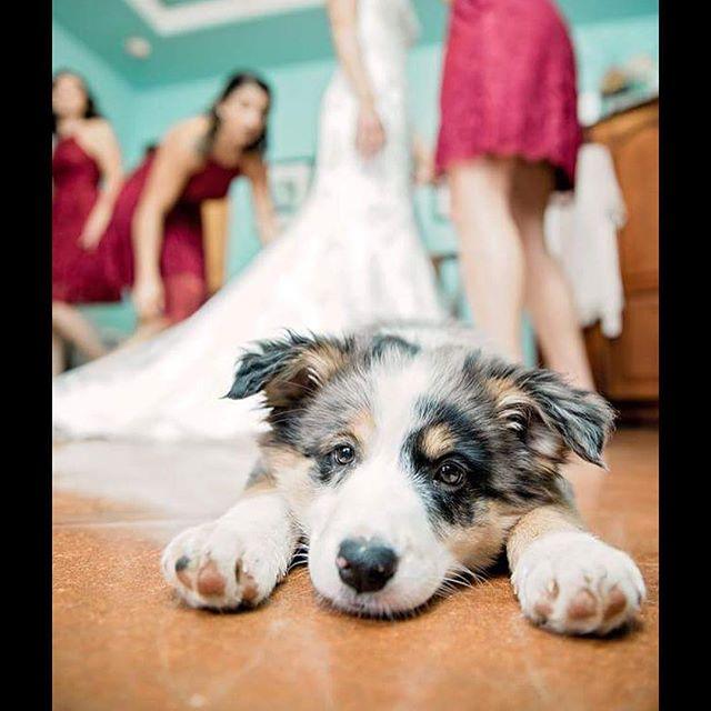 Weddings are a lot of work & details! Somebody got super tired waiting for everything to begin! 💕🐶 . . . . . . . . . #fallwedding  #wedding #fall2018 #bridalparty #bridesmaids #hamiltontwelve #weddingvenue #texasvenue #austin #puppy #shesaidyes #atx #texas #texashillcountry #lakeway #drippingsprings #beecaves  #austintx #austintexas #weddingday  #atxlife  #atxbride #austinbride #atxwedding #acl #acl2018 #austincitylimits #austinwedding  #justengaged #weregettingmarried